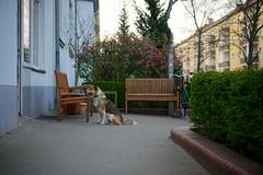 Crusemarkstrae, Berlin-Pankow (danichtfr) Tags: berlin 35mm sony hund f18 nex berlinpankow guessedberlin sonyalpha gwbthomaslautenschlag feierabendrunde sonynex6 sonye35mmf18oss dundkauftour