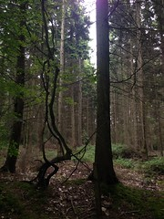 Woods (adrianwoolgar) Tags: wood brown plant tree green nature field grass leaves forest fence landscape living countryside leaf log bush branch view mud natural earth foliage dirt trail bark lane stump trunk bud creature kawasaki highspeed byway klr250