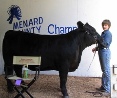 "Menard Co. 4-H Grand Champion Heifer 2009 • <a style=""font-size:0.8em;"" href=""http://www.flickr.com/photos/25423792@N05/14250788948/"" target=""_blank"">View on Flickr</a>"