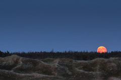 IMG_1733.jpg (nixpix88) Tags: denmark northsea dnemark nordsee ringkoebingfjord regionsyddanmark norrenebel hwidesande