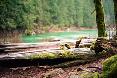 304. Baleen (prenetic) Tags: trees nature river washington moss rocks pacificnorthwest lichen pnw waterleaves