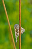 (tobiaszj) Tags: morning detail macro sunrise bug insect during early focus close pentax bokeh cd or tripod meadow 11 sharp after f28 k5 soligor 105mm benbo bokehlicious bokehliciousness