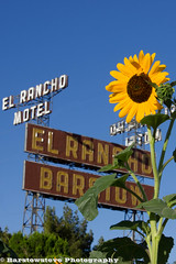 El Rancho Sunflower 210/365 (Barstow Steve) Tags: california ranch project route66 motel el sunflower 365 barstow