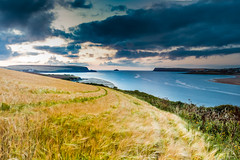 Camel Estuary Sunset (GaryBlack) Tags: sunset sea england panorama seascape field animal animals river landscape evening landscapes twilight eur