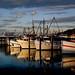 Port  Stephens  NSW Australia