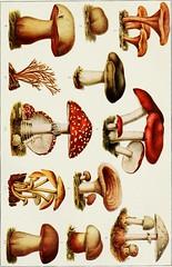 Anglų lietuvių žodynas. Žodis aggregate fruit reiškia bendra vaisių lietuviškai.