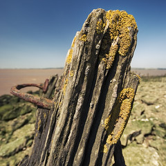 Weathered Stump (Furious Zeppelin) Tags: wooden nikon riverside stump weathered lichen humber d80 furiouszeppelin fz