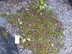 20140809_164216 (Kenzie LaMar) Tags: cactus plants plant cacti succulent montreal botanicalgardens