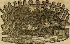 Anglų lietuvių žodynas. Žodis searing-iron reiškia apysaka, kurioje-geležies lietuviškai.