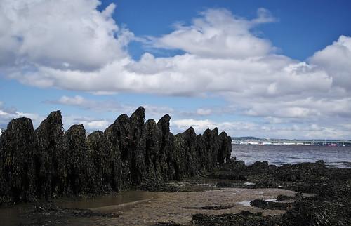 seaweed river boat ship fife path tay coastal shipwreck hull wreckage