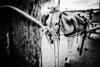 Sítio Bola Barra de Santa Rosa - PB (oliveiraaline9) Tags: burro jumento