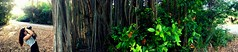 photo by David Antalek (561jaclyn) Tags: trees nature leaves forest canon photography photo leaf vines woods roots mothernature lostintheforest natureporn earthporn