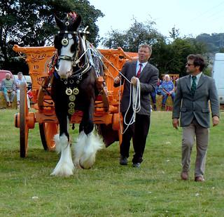 Ceffyl Gwedd-Shire horse.