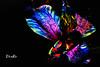 Dix Ro- Flor de Amancay (Dix Ro) Tags: flower méxico mexicana mexico photography design guadalajara jalisco bloom diseño alstroemeria regalo filmmaker artista facebook fotografía fotógrafa realizador florecer vídeo astromelia miesposo elizabethromero regaloparaminovia dixro leyendadelaflordeamancay lasfloresquemeregalominovio