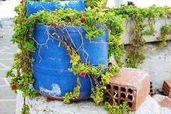 Plant (Katrinitsa) Tags: summer plant colors canon mediterranean aegean efs1855mm pot greece greekislands paros cyclades pisolivadi paros2014