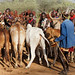 Bull jumping ceremony at Turmi, Omo valley, Ethopia (Hamer tribe)