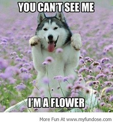 Best Funny Images & Memes,Funny Photos & Pictures| Im a Beautiful Flower! (Best Funny Images & Memes,Funny Photos & Pictures) Tags: gag funnypics memes funnypictures funnyimages lolpictures gagphotos hilariouspictures lolpics funnymemes ragecomics lolimages bestfunnypictures funmemes