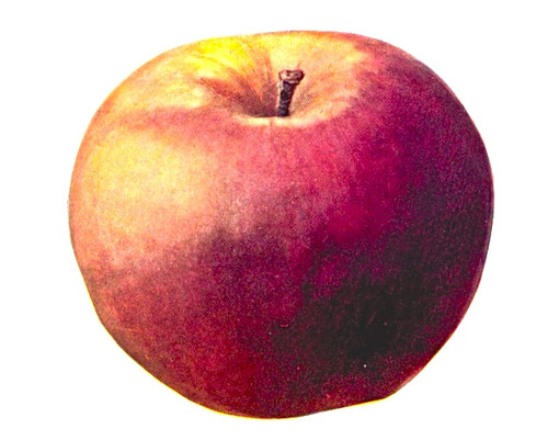 6_shoot_apples_off_the_head