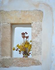 Greece is... (sifis) Tags: flowers nature island nikon greece 28300 sakalak d700 σακαλακ
