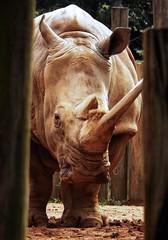 Image44 (Daniel.N.Jr) Tags: animal selvagem zoologico kodakz990