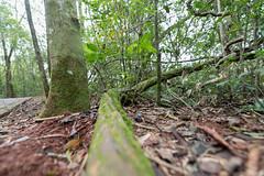 DSC_1921 (quintelacharly) Tags: parque naturaleza tree verde green nature argentina arbol nikon rainforest bokeh earth selva desenfoque planet d750 28 nikkor amateur iguazu misiones tierra 14mm 1424