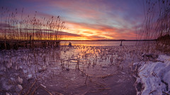 Cold Morning II (Jens Haggren) Tags: olympus em1 samyang75mm sunrise sun morning ice snow reed jetty sky colours landscape view outdoor cold nacka sweden jenshaggren