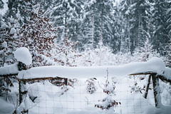 Winter Moments (desomnis) Tags: winter snow frost cold forest wood woods woodland nature fence winterly winterwonderland winterscape winterforest natur naturephotography böhmerwald bohemianforest mühlviertel oberösterreich upperaustria austria österreich bokeh sigma35mm sigma35mmf14dghsmart canon6d desomnis landscapephotography landscape landschaft landscapes