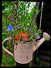 Watering Pot (Andr-DD) Tags: plants garden pflanzen garten gieskanne wateringpot