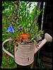 Watering Pot (André-DD) Tags: plants garden pflanzen garten gieskanne wateringpot