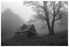 Beskidy 14 (Spartaxus) Tags: mountains tree fog analog kodak tmax beskidy skrzyczne chatka dzewo