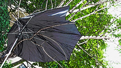GONE WITH THE WIND!! (Bruno LaLibert) Tags: city trees summer streets rain weather umbrella photoshop garbage wind montreal fujifilm hdr hypothetical 2014 sharingart netartll kreativepeople brunolalibert