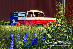 Texas Truck and Bluebonnets