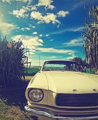 Cooly Rocks on Car Festival 2014