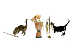 the town musicians of brescia (brescia, italy) (bloodybee) Tags: music white animal fairytale cat fun kitten feline play wind drum djembe percussion humor kitty trumpet flute fantasy instrument brass 365project westernconcertflute townmusiciansofbremen aerophone