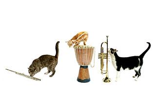 the town musicians of brescia (brescia, italy)