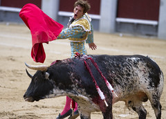 IMG_0861 (San Diego Shooter) Tags: madrid portrait spain europe bull bullfight bullfighting matador torero sanisidro corridadetoros lasventas spanishbullfighting nathanrupert2014spainwithbull