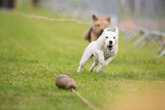 Kent_County_Show_2014_015