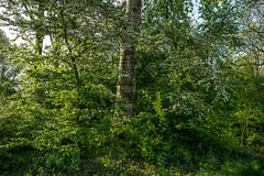 (Digital_trance) Tags: people paris france netherlands windmill amsterdam germany landscape cuisine rotterdam europe belgium louvre euro scheveningen brugge thenetherlands denhaag tulip rhine brussel rhein  giethoorn keukenhof           70d  kologne   lemusedulouvre  a7r  5d3 5diii