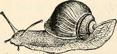 Anglų lietuvių žodynas. Žodis tapeworm reiškia n zool. kaspinuotis, soliteris lietuviškai.