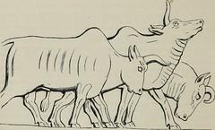 Anglų lietuvių žodynas. Žodis sheep-master reiškia avis-master lietuviškai.