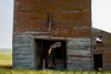 Bingo Grain Co. -3 (nikons4me) Tags: old building abandoned overgrown southdakota decay elevator grain smalltown decaying tallgrass okaton nikonafsdxnikkor35mmf18g nikond7100 bingograinco