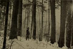 Anglų lietuvių žodynas. Žodis yellow chestnut oak reiškia geltona kaštonas, ąžuolas lietuviškai.