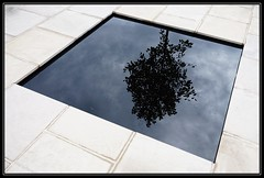 The Black Tree (208/365) (J-o-h-n---E) Tags: black reflection tree london garden pond patio 365 rhs 2014 royalhorticulturalsociety hamptoncourtpalace awps aperturewoolwich
