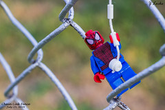 Chain Link Fence- July 25, 2014 (zachary.locks) Tags: lego spiderman hanging chainlinkfence cy365