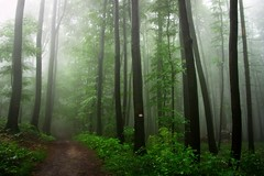 LoveComesTumblingDownOnMe (BphotoR) Tags: fog forest germany woods day nebel camino path july wald odenwald juhhe weschnitztal bphotor