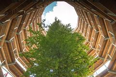 Growing to the sky (Arno M.D.C. Burg) Tags: germany deutschland rügen treetopwalk aussichtsturm baumwipfelpfad inselrügen adlerhorst canoneos70d canonefs1585f3556isusm naturerbezentrumrügen natureheritagecentrerügen viewingtoweraerie