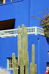 blue #1 (ah zut) Tags: blue bleu morocco maroc marrakech 1834 jardindemajorelle