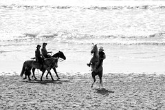 af1408_0381 bw (Adriana Fchter) Tags: sea brazil horses bw horse praia beach beauty animal animals silhouette brasil fauna caballo cheval mar country symmetry fries cavalos ameland impressed pferde cavalo pferd finest natures equine chevaux paard paarden sweetface equino galope slott equines friese friesche pferden cavalgada mywinners friesische professionalequineimages adrianafuchter snogeholms