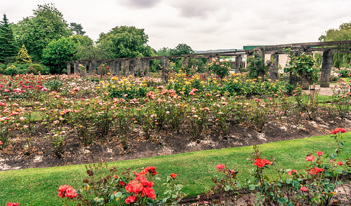THE ROSE GARDEN WITHIN BELFAST BOTANIC GARDENS Ref-766