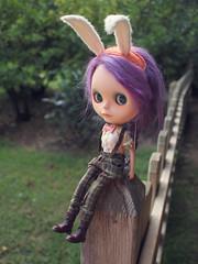 Bowtie Campion Bunny